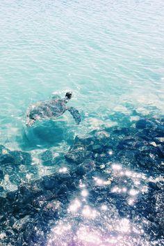 kiholo bay, Hawaii // #turtle #kiholobay #hawaii #kona #iphone5 | joanna sutton | VSCO Grid