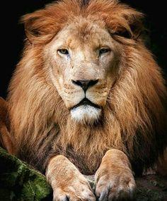 My logo! King ♔  WildGeography  | Photo by ©Fotografie-Egmond  #WildGeography