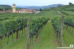 Cinco sugestões de passeios em vinícolas na Serra Gaúcha, que oferecem experiências inesquecíveis.