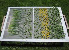 How To Dehydrate Food Without Electricity - http://SurvivalistDaily.com/how-to-dehydrate-food-without-electricity/