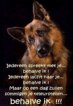 Honden <3 <3 <3