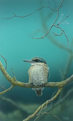Sacred Kingfisher & Damselfly - Christopher Pope