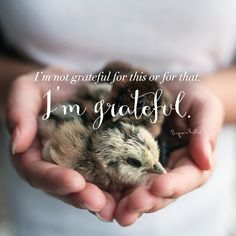 I'm not grateful for this or for that. I'm grateful. - Byron Katie