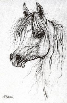 Arabian Horse Drawing 46 Drawing