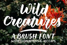 Wild Creatures | a brush font by Ana's Fonts on @creativemarket