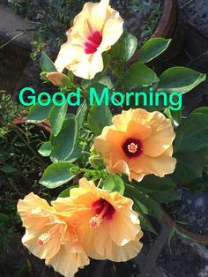 Good Morning Beautiful Pictures, Good Morning Images, Good Morning Wishes, Good Morning Quotes, Gm Images, Planter Ideas, Flower Planters, Beautiful Roses, Colorful Flowers