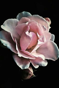Flowers Nature, Pretty Flowers, Exotic Flowers, Pink Nature, Photo Rose, Floral Photography, Arte Floral, Flower Pictures, Beautiful Roses