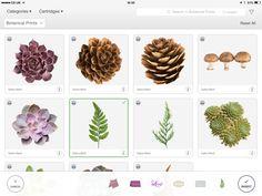 Botanical Prints Cricut