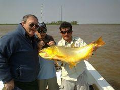 #Dorados en #LaPazEntreRíos, muy buena #Pesca en plena temporada, los esperamos!