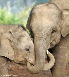 india animals - Google Search