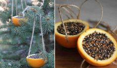 Cinco usos para la cáscara de naranja   Notas   La Bioguía