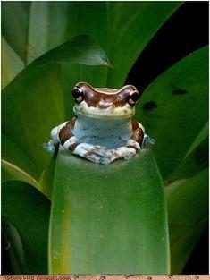 Frog!