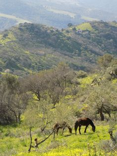 Our horse in our olive grove Chianafavata-Pollina-Sicily