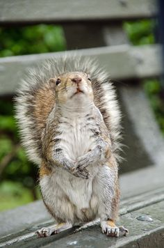 Well, i am pretty awesome.  Grey Squirrel