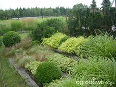 Boćkowe perypetie ogrodkowe - strona 716 - Forum ogrodnicze - Ogrodowisko