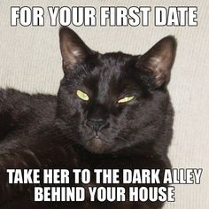 Dating Advice from a Cat..hah!