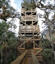 Walk on the Treetops @ Myakka River State Park from Florida Travel and Life Magazine (Photo by Kevin Mims)