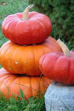 the reason I love Cinderella pumpkins so much...ultimate stackers