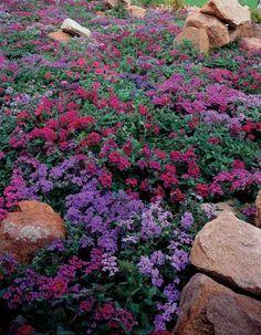 jardin de rocaille orné de fleurs en rose et violet et grosses pierres de formes irrégulières