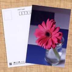 """花のポストカード ガーベラ(ピンク)/Postcards of flower  Gerbera (pink)、携帯向け花の待ち受け画像サイト「mobile flower pot」でご好評いただいた画像「ガーベラ(ピンク)」をポストカードにしました。  はがきとしてはもちろん、フォトスタンドに入れて飾るのも、メッセージカードとしてプレゼントに添えるのもいいですよ!  I was the post card image of the popular """"Gerbera (pink)"""" Wallpapers site flower mobile phones in the """"mobile flower pot"""".  As well as postcards, and decorate to put the photo stand also, it's .... for a present as a message card you're good!"""