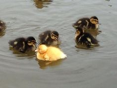 The Lancaster Canal: see our photos - Ducklings Narrowboat Hire