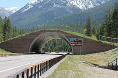 "Montana, USA An ""animal bridge"" helps wildlife cross the road in one of Montana's national parks."