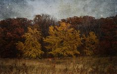 Fall Fields #photography #texture