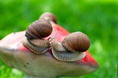 snail kiss | Flickr - Photo Sharing!