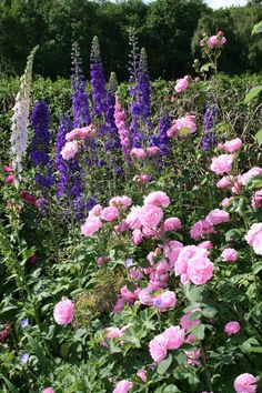 Roses, delphiniums and foxgloves.perfect selection.going to fill our borders randomly with these