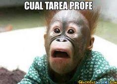 Cual_tarea.jpg