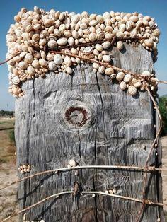 Snail on wood, Zahora, Spain