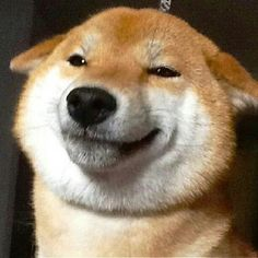 blogefordoges:  doge y r u so pleesd did u just eet a treate