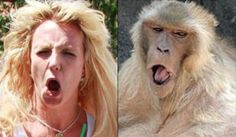 12 Celebrities and Their Animal Lookalikes: Britney Spears and Baboon