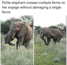 This elephant is more polite than most humans