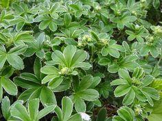 Healing Herbs, Herb Garden, Spices, Blog, Food, Hobbies, Spice, Herbs Garden, Blogging