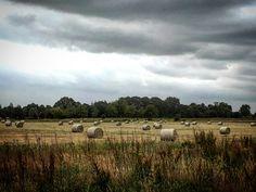Brabants landschap. Zomer 2017