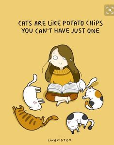 I love cats AND potato chips! I Love Cats, Cute Cats, Funny Cats, Funny Animals, Cute Animals, I Like Dogs, Wild Animals, Crazy Cat Lady, Crazy Cats