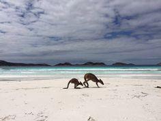 Lucky Bay Western Australis