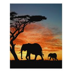 Shop African Safari Sunset Elephant Silhouette Art Poster created by LolasArtAttic. Elephant Pictures, Elephants Photos, Baby Elephants, Elephant Poster, Elephant Art, Elephant Paintings, Funny Elephant, African Safari, African Art