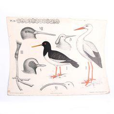 Norwegian Bird School Poster