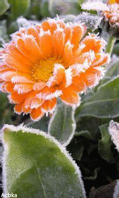 Замерзший цветок