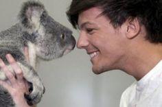 Louis Tomlinson One Direction Koala Bear http://befunkey.net