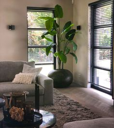 Interior Design Living Room, Living Room Designs, Diy Bedroom Decor, Diy Home Decor, Living Room Decor Inspiration, House Plants Decor, Interior Plants, Boho Living Room, Dream Home Design