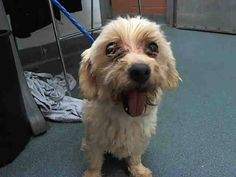 Urgent Dogs of Miami MAMA (A1669522) I am a female white Maltese. The shelter staff think I am about 6 years old. I was found as a stray and I may be available for adoption on 01/05/2015. — at Miami Dade County Animal Services.