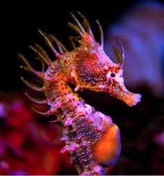"Underwater Photographer Dave Harasti's ""Punk Seahorse"" Underwater Creatures, Underwater Life, Ocean Creatures, Beautiful Creatures, Animals Beautiful, Leafy Sea Dragon, Fiery Dragon, Life Under The Sea, Underwater Photographer"