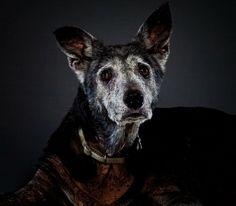 Senior-Dogs-PHUNRISE-5-1240x1086