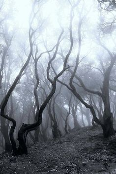 I want to explore these woods. But not alone. That just would be a bad idea.