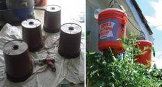 Så här kan du odla tomater upp och ner ... perfekt för balkongen! - TittaPaVideon.se