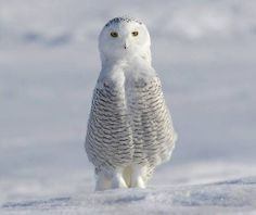 Love owls bc they remind me of Sawyer!