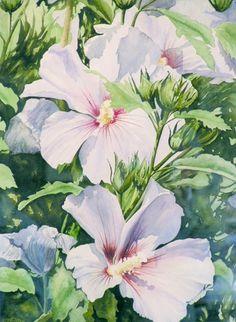 Aquarelle Hibiscus - Gerard Bastien